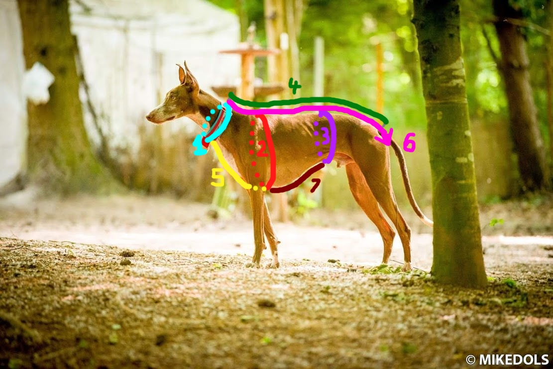 Messanleitung für Hundemäntel