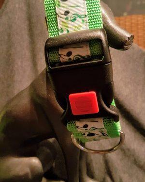 Hundehalsband Neongruen Mit Noten